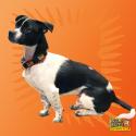 wild mikes dog collar model 2